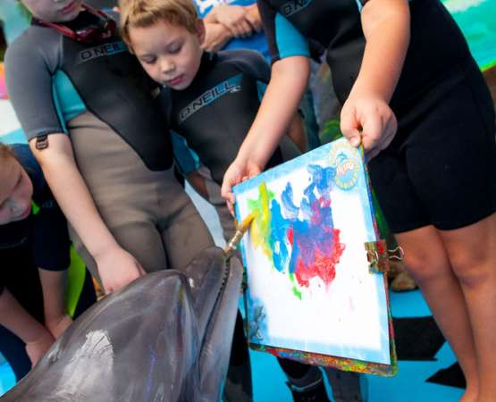 Dolphin therapy for children from Zabota Charitable Foundation - photos and special offers